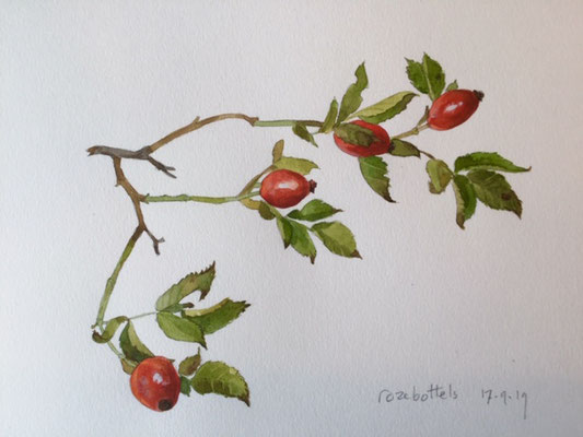 rose hips II, pencil and watercolour Annette Fienieg 2019