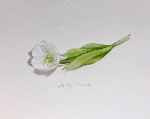 16-2-2021 Witte tulp, Annette Fienieg