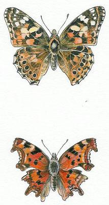 Annette Fienieg: Het grote vlinderboek