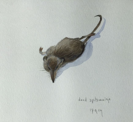 dead mouse, pencil and watercolour Annette Fienieg 2019