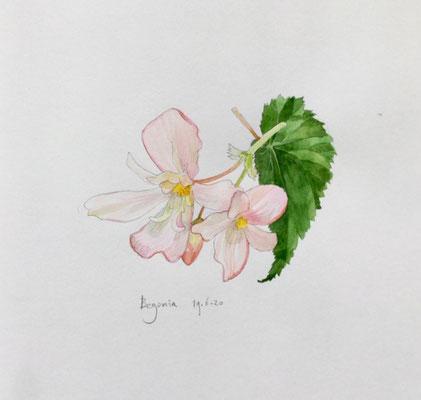 Annette Fienieg: Begonia