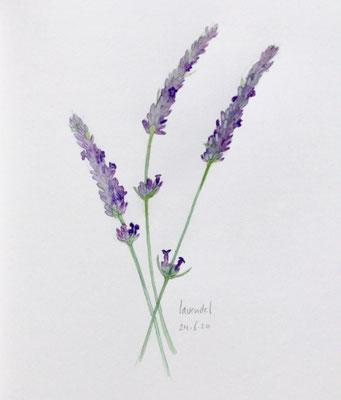 Annette Fienieg: Lavender