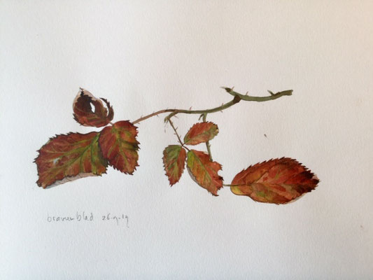 bramble leaves, pencil and watercolour Annette Fienieg 2019