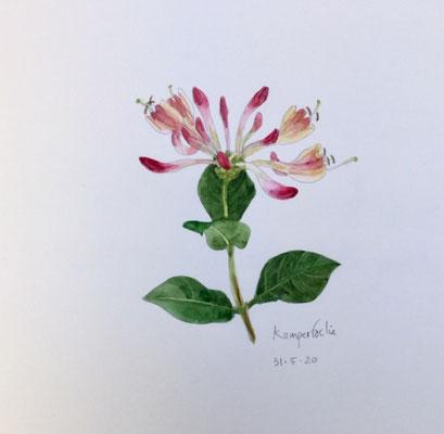 Annette Fienieg: honeysuckle