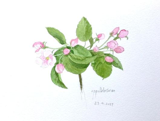 Annette Fienieg: Apple blossom, 23-4-2021