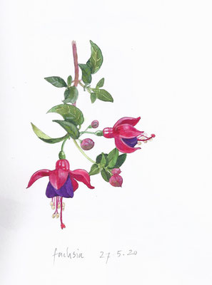 Annette Fienieg: Fuchsia