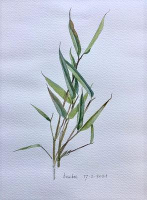 17-2-2021 Bamboe, Annette Fienieg