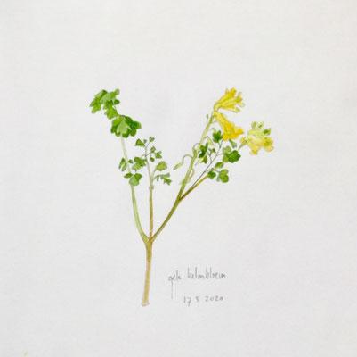 Annette Fienieg: Yellow corydalis