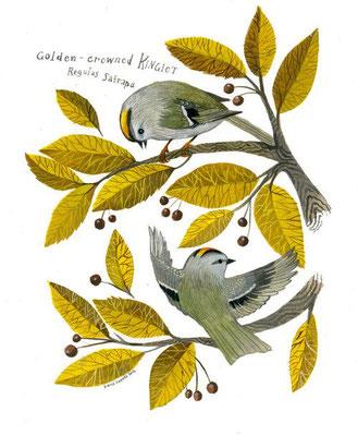 Diana Sudyka: Golden-crowned Kinglet