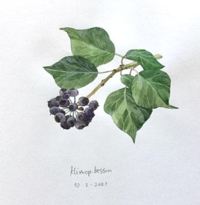 10-2-2021; Hedera berries, Annette Fienieg