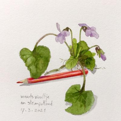Annette Fienieg: Maarts viooltje en stempotlood; 17-3-2021