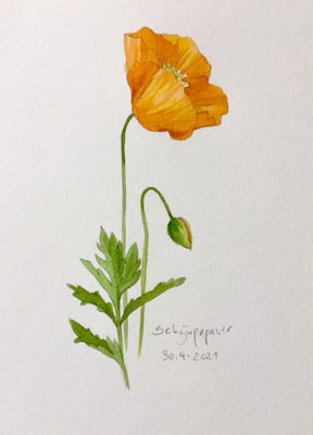 Annette Fienieg: Welsh Poppy, 30-4-2021