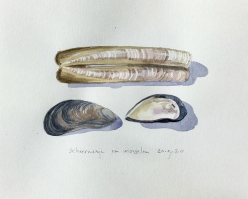 Annette Fienieg: Razor clam and mussels