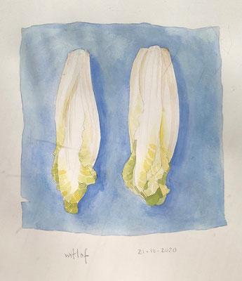 Annette Fienieg: Chicory 21-10-2020