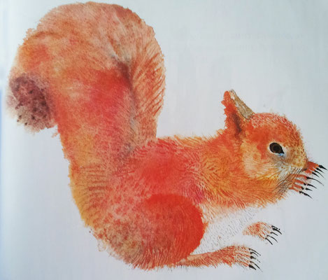 Brian Wildsmith: squirrel