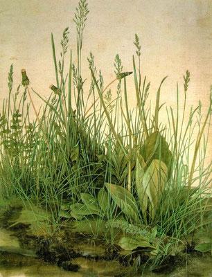 Albrecht Dürer: pol gras
