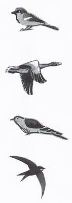 vogelvignetjes Naar het noorden
