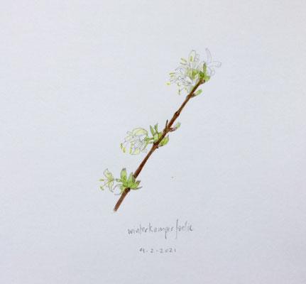 Annette Fienieg: Winter Kamperfoelie, 4-2-2021