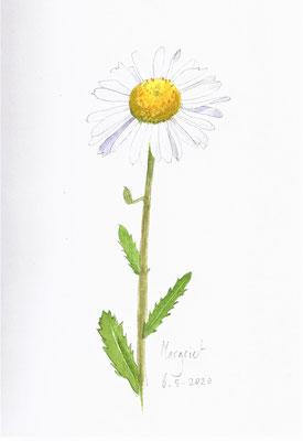 Annette Fienieg: Daisy