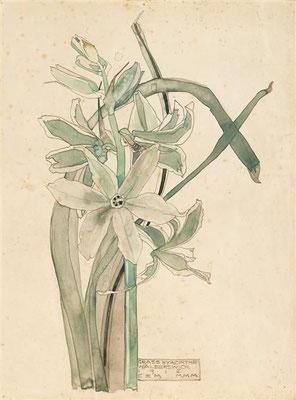 Charles Rennie Macintosh: Gras hyacint