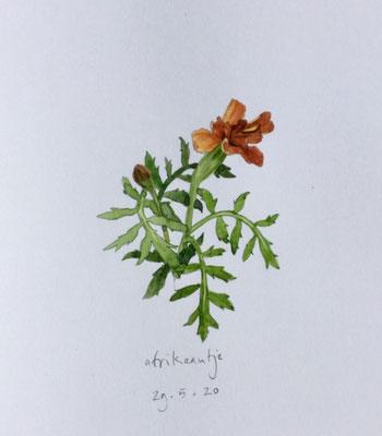 Annette Fienieg: marigold