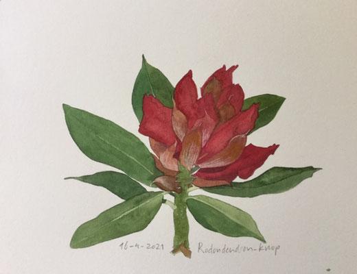 Annette Fienieg: Rododendron knoppen, 16-4-2021