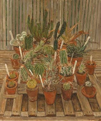 Olwyn Bowey: Cacti