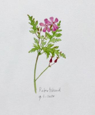 Annette Fienieg: Herb-Robert