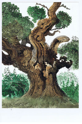 David Gentleman: Oak tree