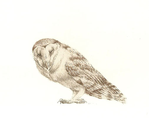 Peter Vos: barn owl