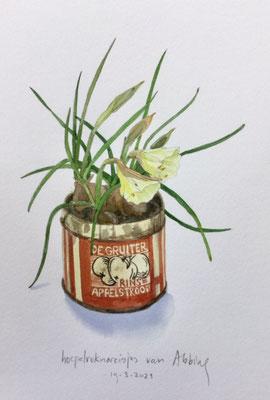 Annette Fienieg: Narcissus Bulbocodium; 19-3-2021