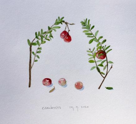 Annette Fienieg: Cranberry 18-9-2020