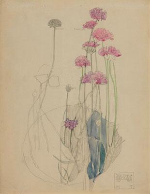Charles Rennie Macintosh: Sea pink