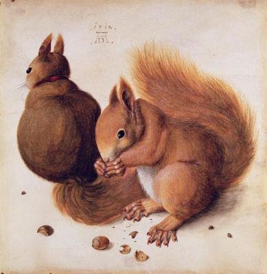 Albrecht Dürer: eekhoorns