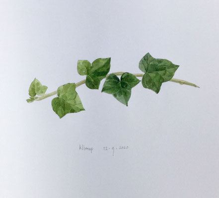 Annette Fienieg: Klimop 12-9-20