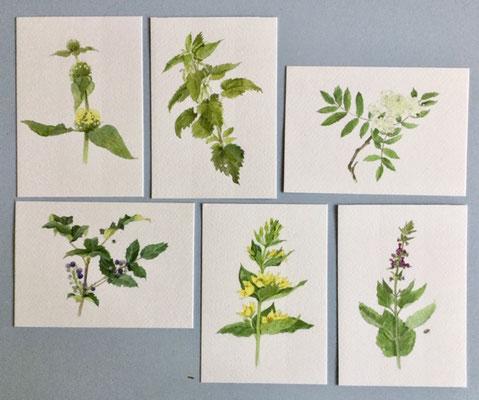 set 1, garden plants