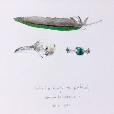 Annette Fienieg: Skull and bone of a carrier pigeon, feather of a ring necked parakeet; 18-11-2020