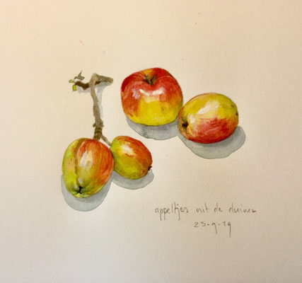 appeltjes uit de duinen, aquarel en potlood Annette Fienieg 2019