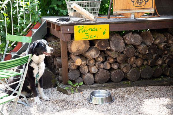 Der Kirchheimer Hirschgarten - Biergarten unter Kastanien - 22