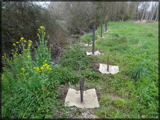 Plantation d'une véritable ripisylve avec des essences locales sur certaines portions de la Rèze et du Paunat sur lesquelles l'absence de végétation était préjudiciable au cours d'eau ou aux terrains.