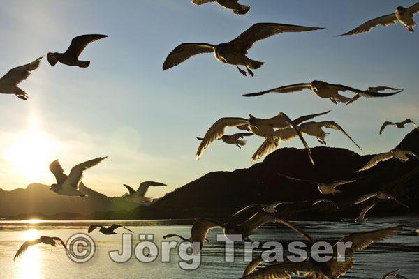 Abendvögel