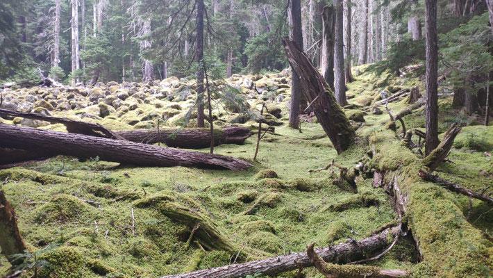 Wald überwachsen mit Moos