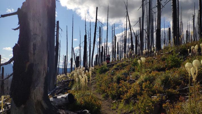 Immer wieder ausgebrannte Wälder, teils kilometerweit