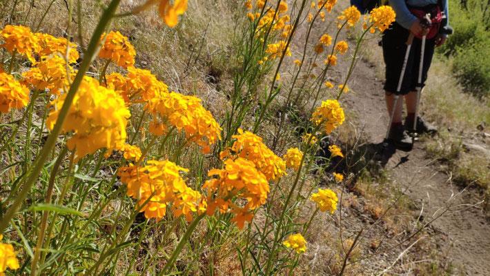 Die Blumen hier blühen gerade in den prächtigsten Farben