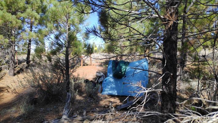 Zelten unter Pinien am neuen PCTA-Trailregister