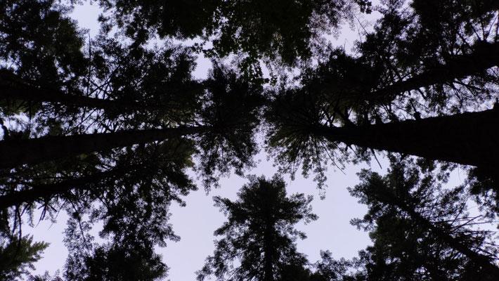 Blick nach oben beim Cowboycamping