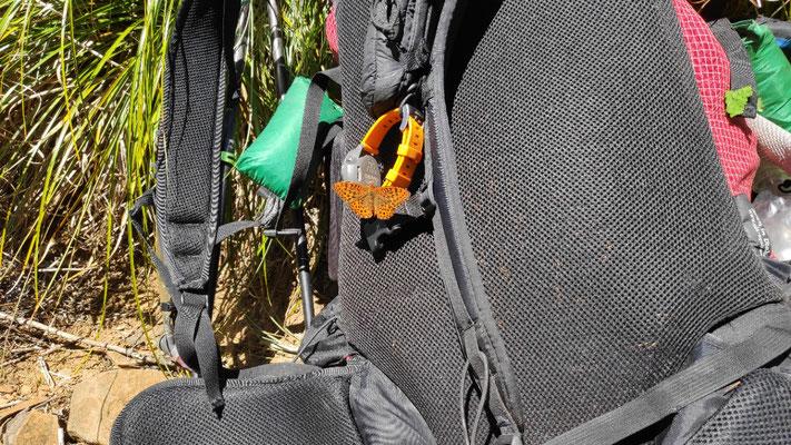 Schmetterlinge mögen Ollis Uhr, hier sogar mit farblicher Entsprechung