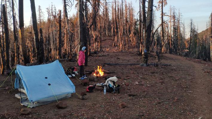 Zeltplatz inmitten abgebrannter Bäume