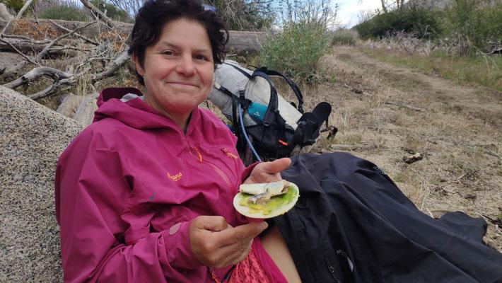 """Hmh?! Tortillas mit Avocado und Thunfisch. Das """"Trägermaterial"""" Tortillas geht uns zunehmend auf die Geschmacksnerven 😅"""