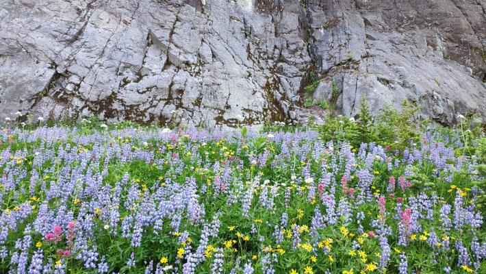 Blumenpracht vor kontrastreicher Kulisse